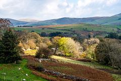 Welsh landscape.49jpg