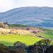 Welsh landscape.53jpg