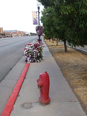Flowers & hydrant