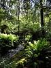 Rainforest creek 2