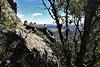 Mountain goats / ibex.