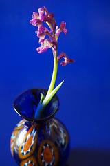 still life pink and blu