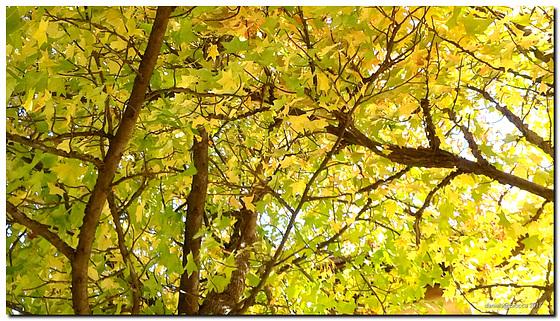 Autumn -Under the trees