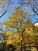 -herbstbaum 7228