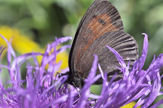 Papillon dans une forêt mauve