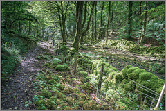 A HFF to all.. from Dj.... 'Ravensdale'.. Derbyshire.