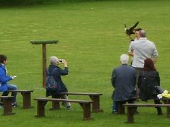 Falconry demonstration.
