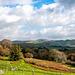 Welsh landscape47