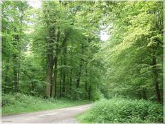 Oberwald Karlsruhe - Holderweg