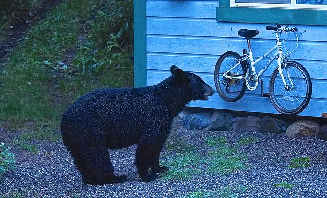 Checking a bike.