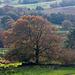 Welsh landscape73