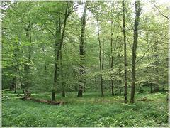Frisches Grün im Oberwald Karlsruhe