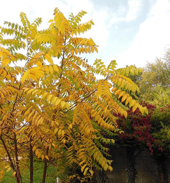 Un arbre en or ! A golden tree!