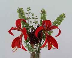 Jacobean lilies