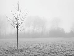 Morgendunst im Witthausbusch