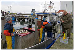 Frischer Fisch Verkauf
