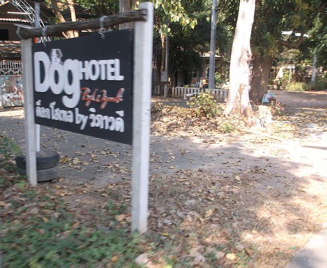 Hôtel pour chiens / Dog hotel