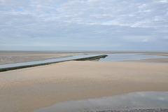 BERCK Baie de Somme Les phoques