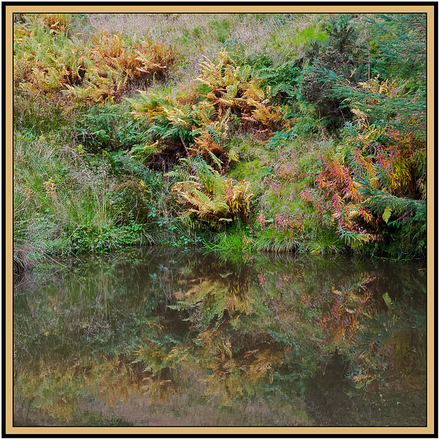 Autumn colours in a forest pond