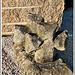 Croix géminées, à Pellan, (Moyen-Age) 22 Pleudihen sur rance