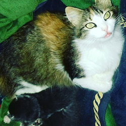 Pasha with her little kittens