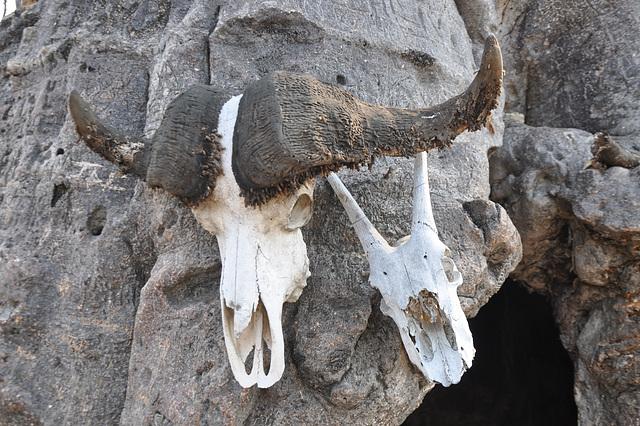 Bestaj kranioj ornamas la enirejo al la baobaba ĉambro. Landlimo de Ngoma
