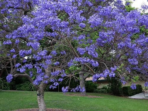 L.A. County Arboretum (1040)