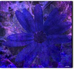 ...die blaue Blume...