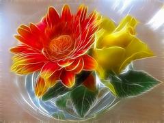 Gerbera an Rose... ©UdoSm