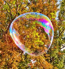1 (41)...big bubble
