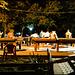 Shimkent nights