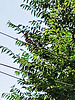 Hoopoe on the wire. H. A. N. W. E. everyone!