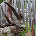 Der Horndrache - The Horned Dragon (PiPs)