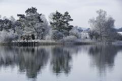 Winter am Pfäffikersee (© Buelipix)