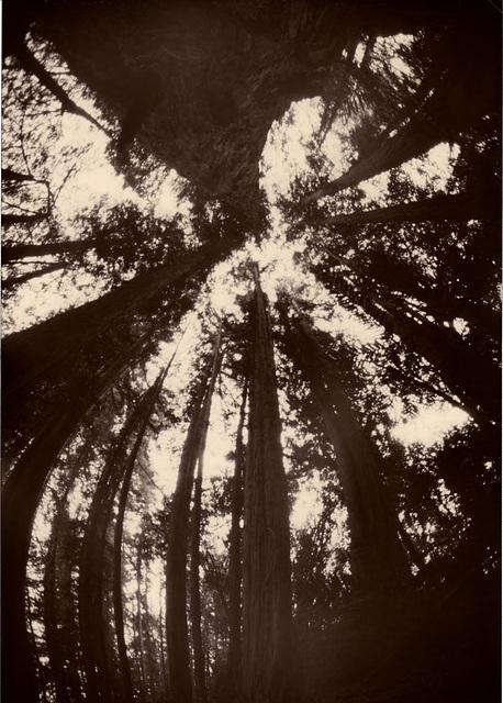 Redwood rhythms