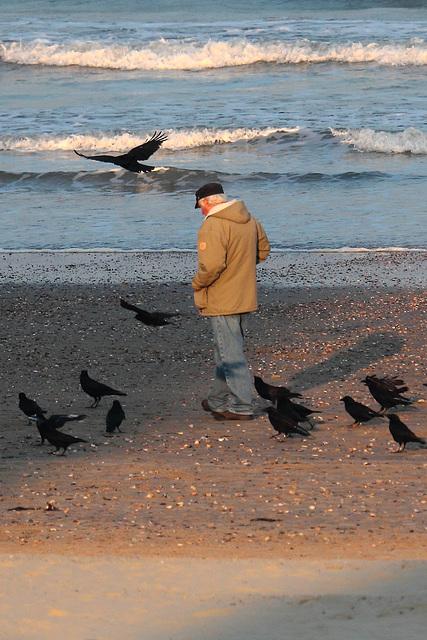 Shuffle Crow