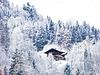 ... heute  - im Schnee ...  (PiP)