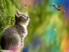Cats and birds are not necessarily friends :-)