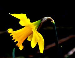 3 (2)...austria flower power
