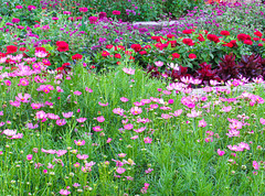 Medley of Flowers