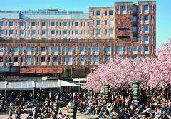 stockholm 2019 8
