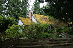 Moss Covered Cottage In Sooke