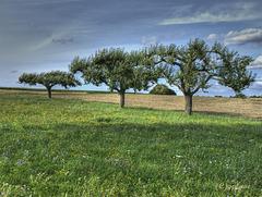 Three Trees (PiP)