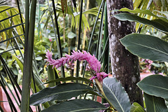 Pink Tail – Baldi Hot Springs, La Fortuna, Alajuela Province, Costa Rica