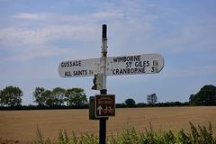 Dorset lanes