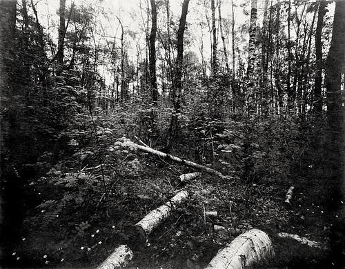 Waldstück am Ellerbrook Sülldorf// 02-wald-29-04-2018 PNG