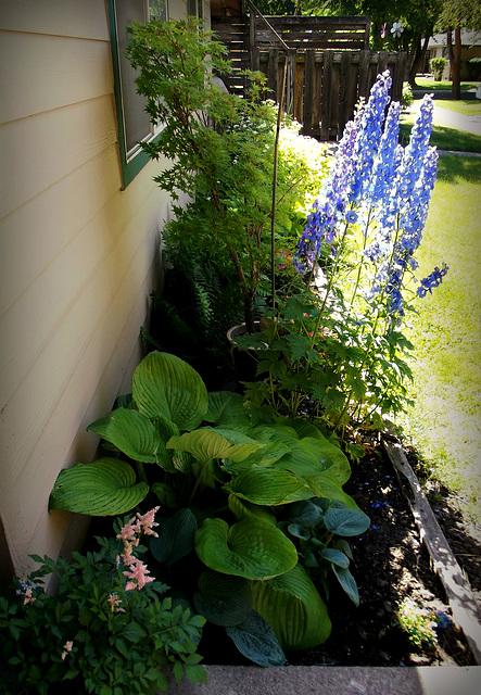 A tiny garden