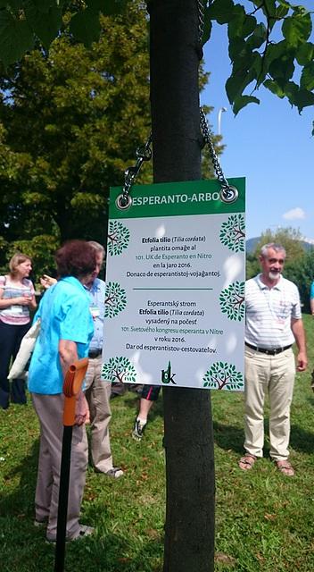 La plej nova Esperanto-arbo ! - tilio plantita 26.7.2016 en Nitra omaĝe al Esperanto-Tago kaj la 101a UKo
