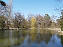 Озеро в дендропарке