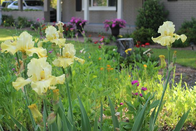Across my Garden